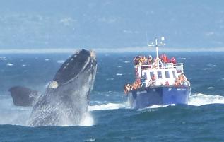 Hermanus und False Bay - Wale und mehr