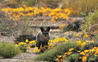 Blumen- und Naturreise Namaqualand